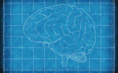 Principios de la plasticidad neural dependiente de experiencia